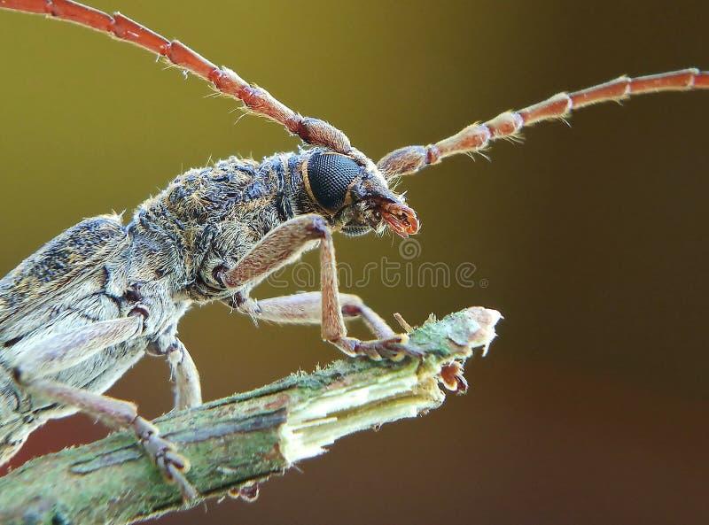 Άγριο έντομο στοκ εικόνες