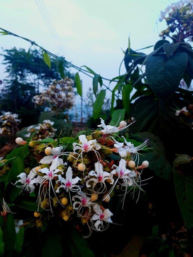 Άγριο λουλούδι ψυχικής ηρεμίας στοκ εικόνες