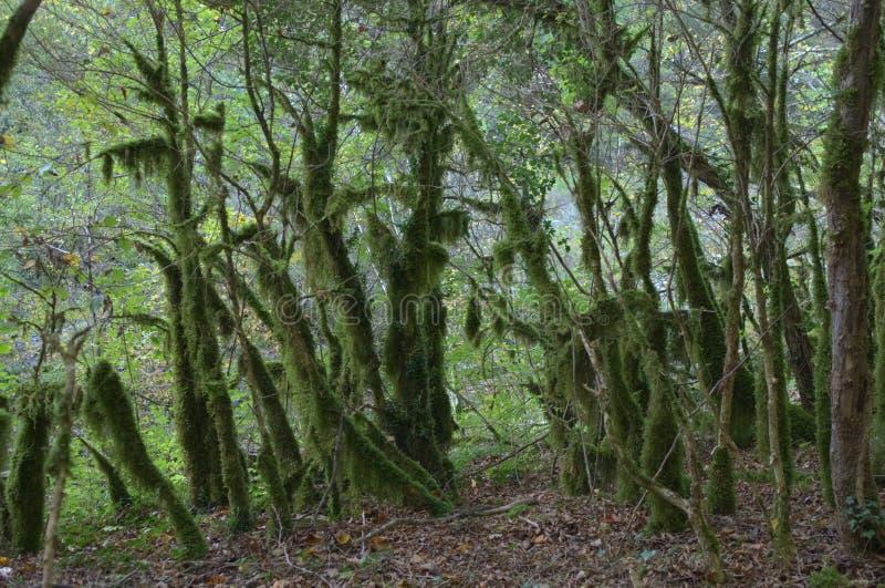 Άγριο μοσότερο δάσος στοκ φωτογραφία
