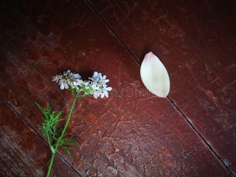 Άγριο πεντάλι λουλουδιών και magnolia που βρίσκεται στον ξύλινο πίνακα στοκ εικόνα με δικαίωμα ελεύθερης χρήσης