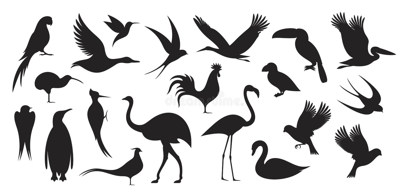 Άγριο πουλί Σκιαγραφία πουλιών διανυσματική απεικόνιση