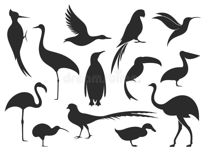 Άγριο πουλί Σκιαγραφία πουλιών ελεύθερη απεικόνιση δικαιώματος