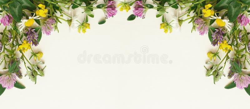 Άγριο πλαίσιο λουλουδιών στοκ εικόνες