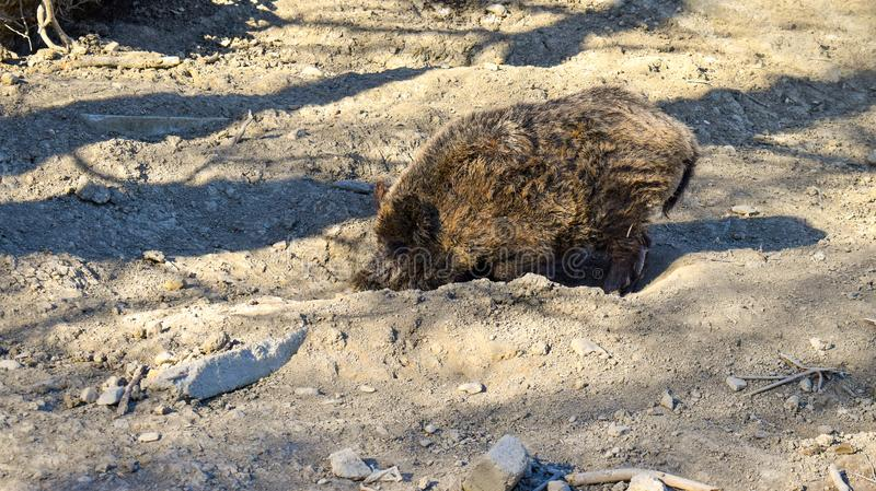 Άγριο σκάψιμο πινάκων στοκ φωτογραφία