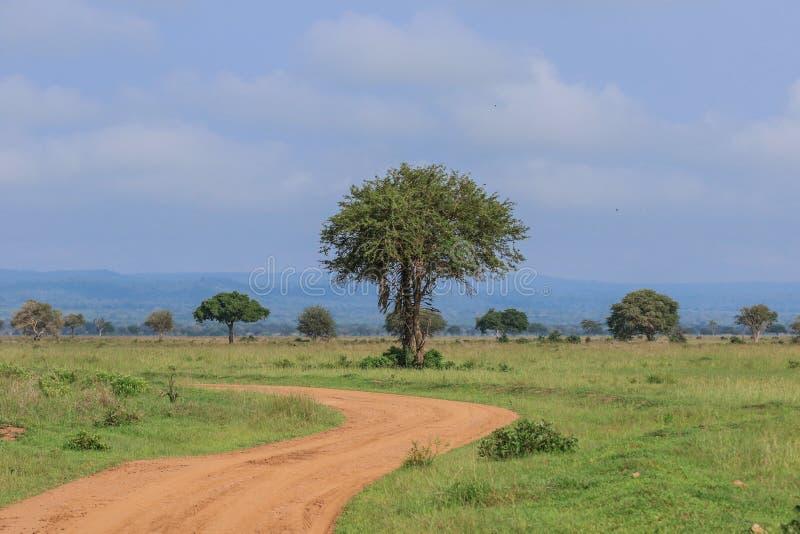 Άγριο Wildebeest στο εθνικό πάρκο Mikumi, Τανζανία στοκ εικόνες με δικαίωμα ελεύθερης χρήσης