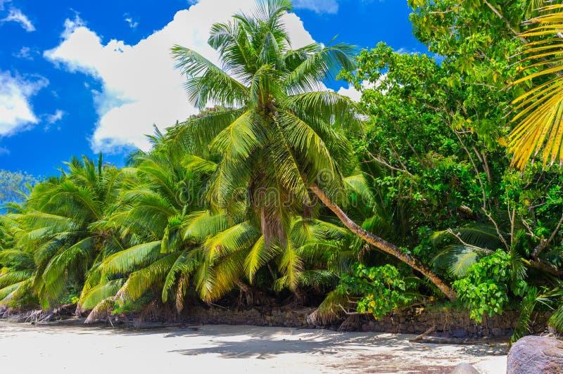 Άθικτη τροπική παραλία στις Σεϋχέλλες στοκ εικόνες με δικαίωμα ελεύθερης χρήσης