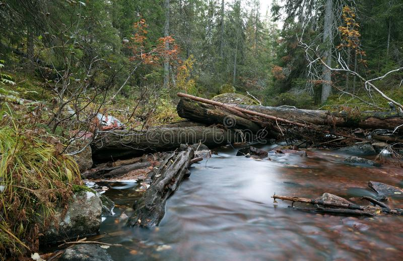 Άθικτος φυσικός ποταμός που τρέχει μέσω του δάσους το φθινόπωρο στοκ φωτογραφίες με δικαίωμα ελεύθερης χρήσης