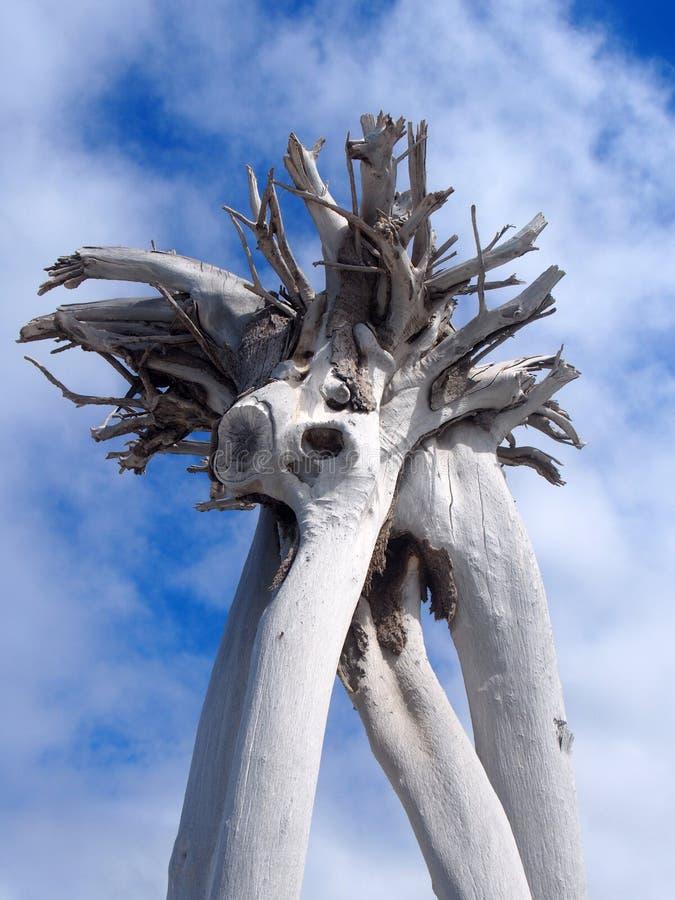 Άκαμπτο άσπρο νεκρό δέντρο δέντρο ενάντια στα σύννεφα και το μπλε ουρανό στοκ εικόνα με δικαίωμα ελεύθερης χρήσης