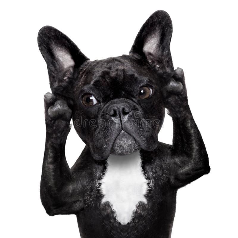 Άκουσμα σκυλιών στοκ εικόνες