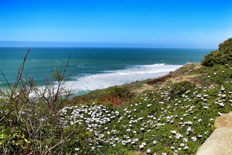 Άκρη απότομων βράχων που εξετάζει τον Ατλαντικό Ωκεανό και που καλύπτει με τη βλάστηση στοκ φωτογραφία με δικαίωμα ελεύθερης χρήσης