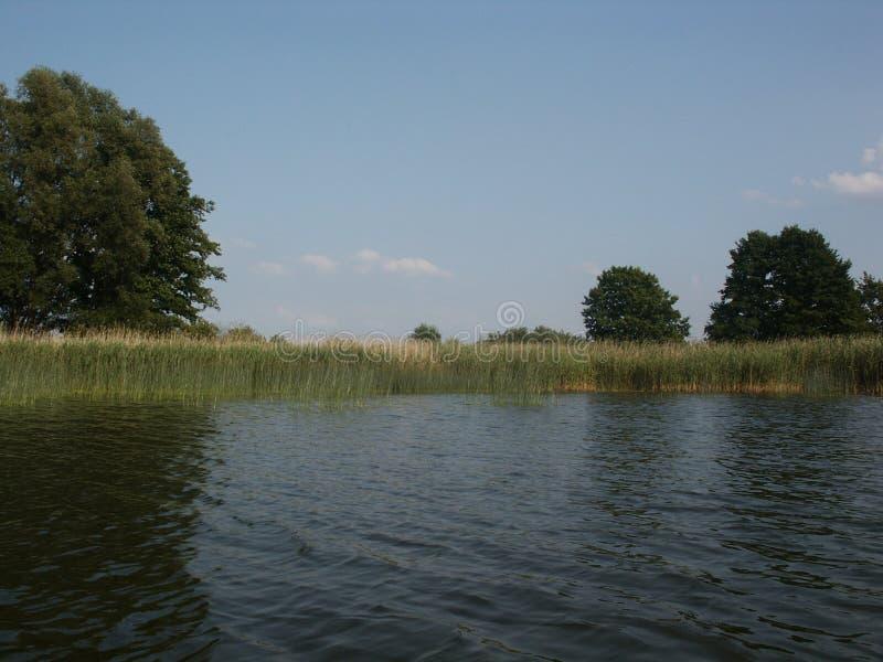 Άκρη καλάμων κατά μήκος του νερού στοκ εικόνες