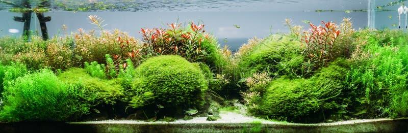 Άλγη ενυδρείων, στοιχεία της χλωρίδας στο fishbowl στοκ εικόνα