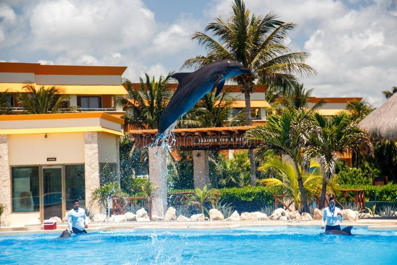 Άλμα δελφινιών υψηλό κατά τη διάρκεια μιας επίδειξης σε Varadero, Κούβα στοκ φωτογραφία με δικαίωμα ελεύθερης χρήσης