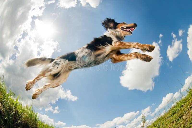 άλμα σκυλιών στοκ εικόνες με δικαίωμα ελεύθερης χρήσης