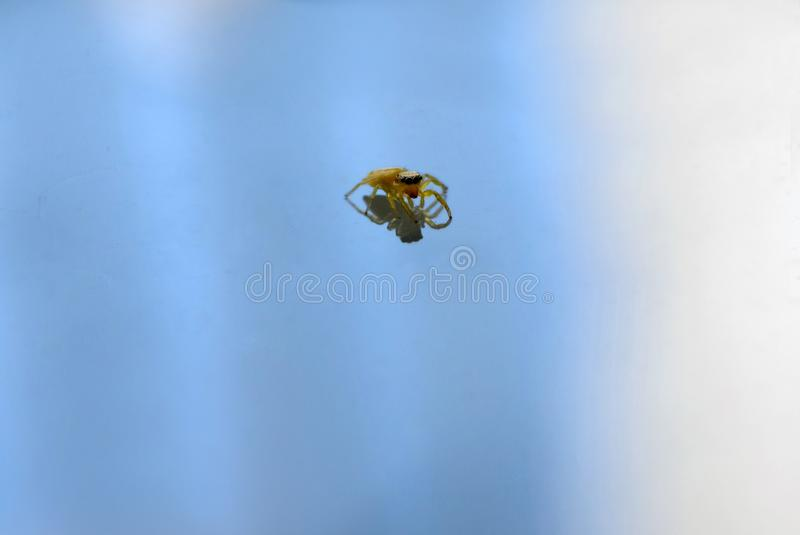 Άλμα της αράχνης στο σαφές μεταλλικό υπόβαθρο με την αντανάκλαση στοκ εικόνα