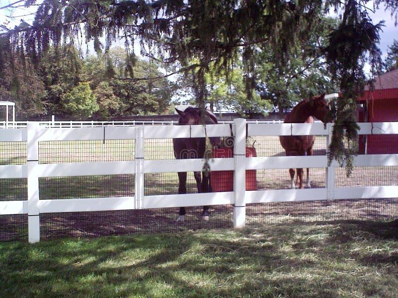 Άλογα κατάψυξης στο ζωολογικό κήπο στοκ εικόνες