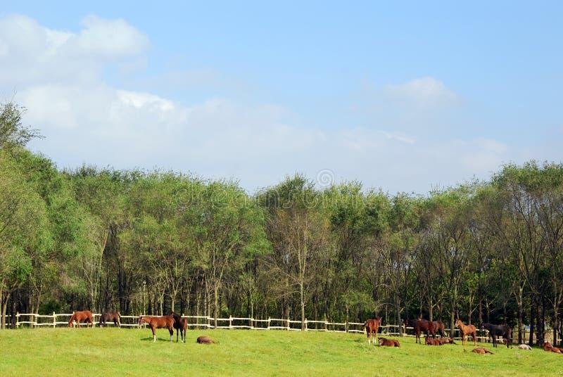 άλογα κοραλλιών στοκ εικόνες