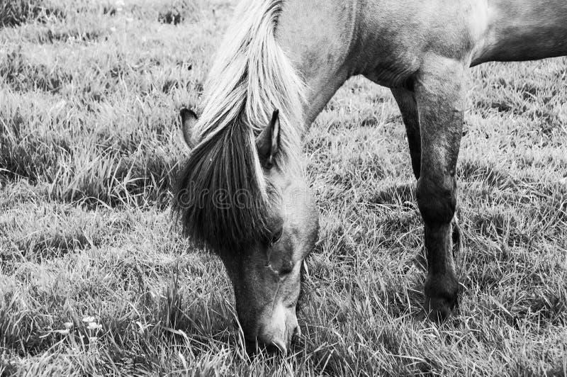 Άλογα που βόσκουν στα πράσινα λιβάδια στοκ φωτογραφία με δικαίωμα ελεύθερης χρήσης