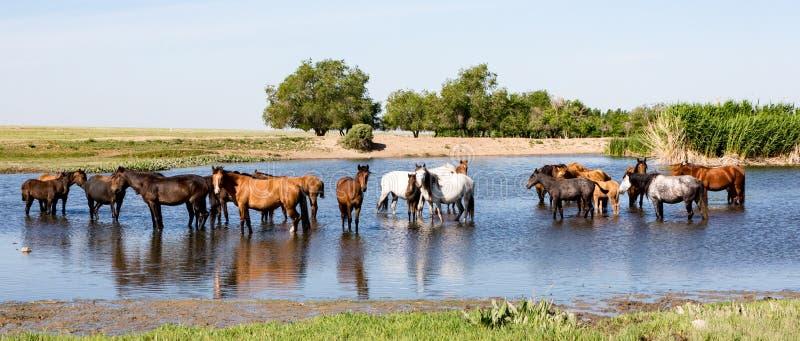 Άλογα που στέκονται στη λίμνη στοκ φωτογραφίες με δικαίωμα ελεύθερης χρήσης