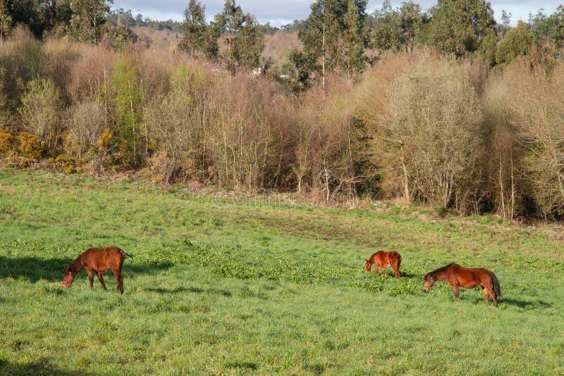 Άλογα που στο λιβάδι στοκ φωτογραφία