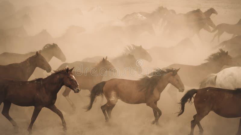 Άλογα που τρέχουν και κλωτσάνε σκόνη Γιλκίκ άλογα στο Καϊσερί Τουρκία είναι άγρια άλογα χωρίς ιδιοκτήτες στοκ φωτογραφία με δικαίωμα ελεύθερης χρήσης
