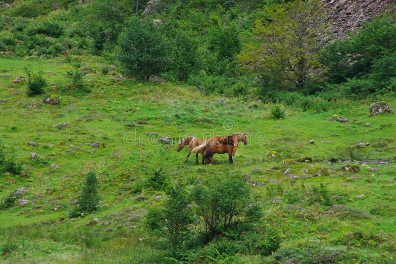 Άλογα σε ένα πράσινο λιβάδι με μερικά χαλίκια στοκ εικόνα