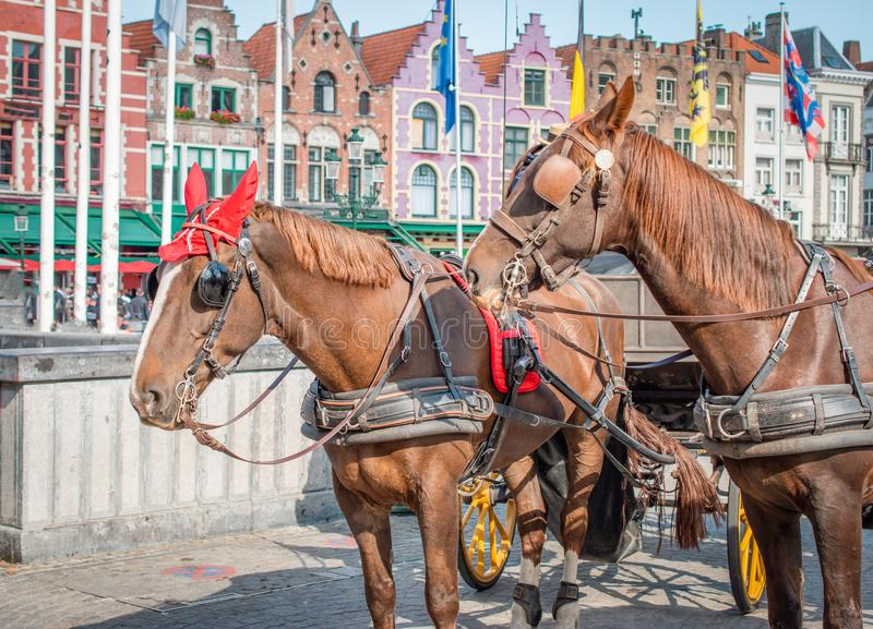 Άλογα στη Μπρυζ, Βέλγιο στοκ εικόνες