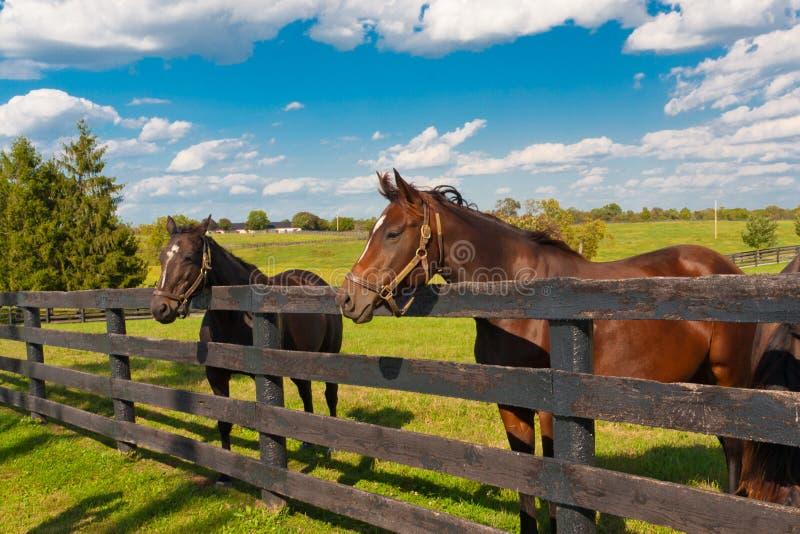 Άλογα στο αγρόκτημα αλόγων στοκ εικόνες με δικαίωμα ελεύθερης χρήσης