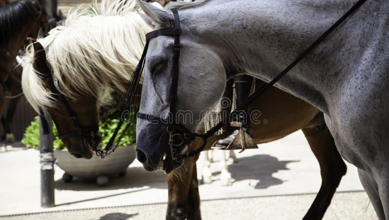 Άλογα στο προσκύνημα στοκ εικόνα με δικαίωμα ελεύθερης χρήσης