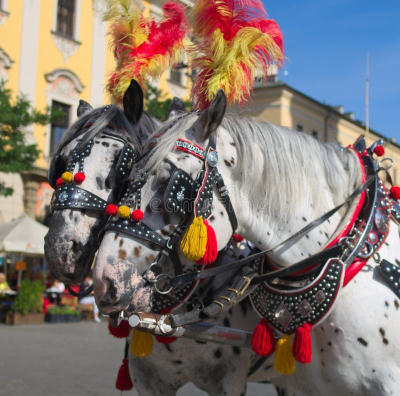Άλογα της Κρακοβίας στοκ εικόνες