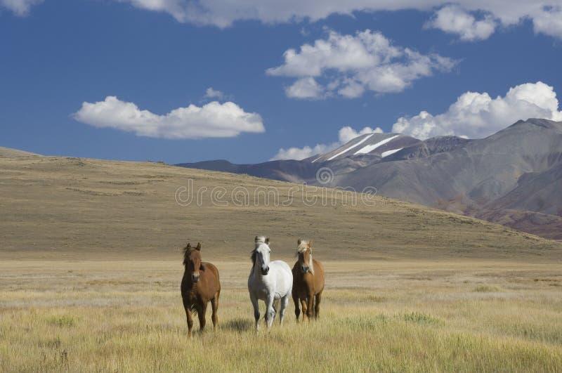άλογα τρία στοκ εικόνες