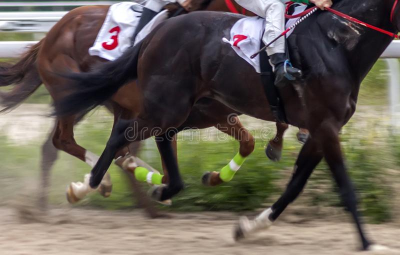 Άλογα τρεξίματος κοντά επάνω στοκ φωτογραφία με δικαίωμα ελεύθερης χρήσης