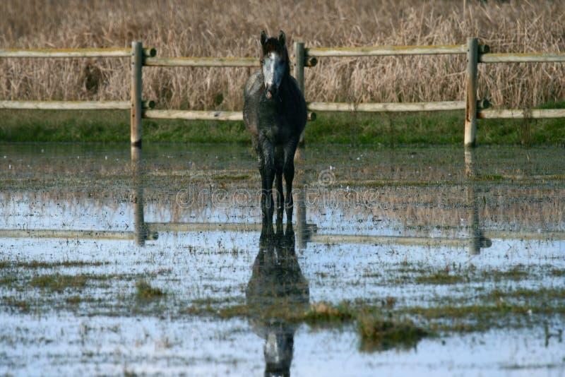 Άλογα 7 στοκ φωτογραφία