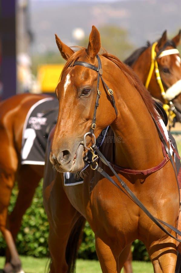 Άλογο αγώνων στοκ φωτογραφίες