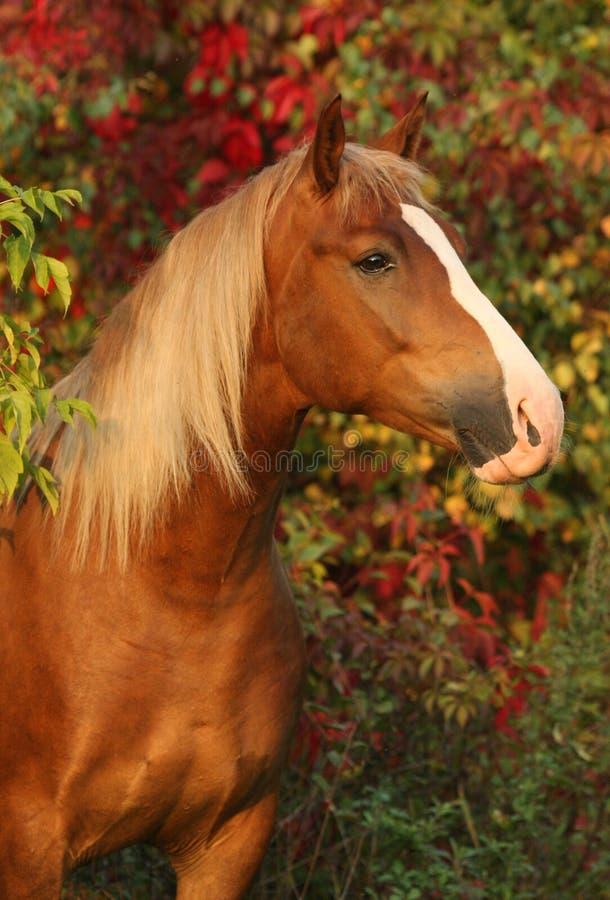 άλογο ανασκόπησης φθινο& στοκ φωτογραφίες με δικαίωμα ελεύθερης χρήσης