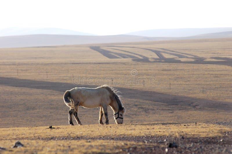 άλογο Θιβέτ στοκ εικόνα με δικαίωμα ελεύθερης χρήσης