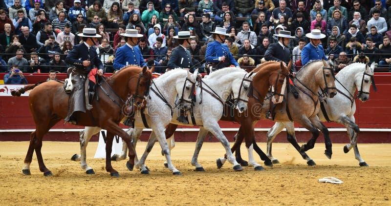 Άλογο ισπανικά στο θέαμα στοκ εικόνες με δικαίωμα ελεύθερης χρήσης