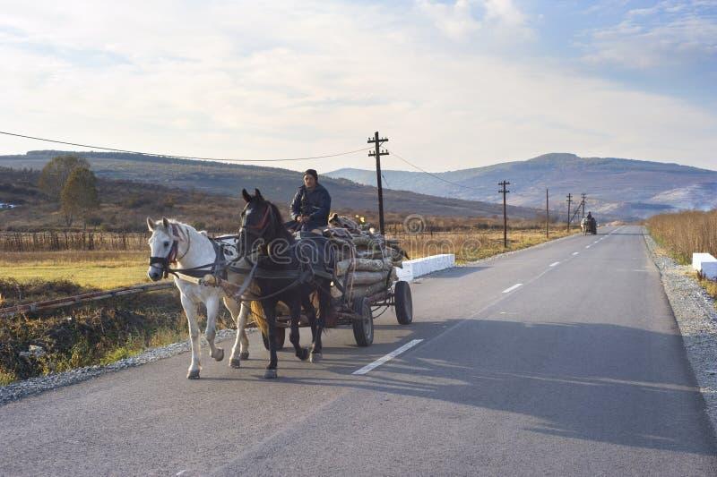 άλογο κάρρων στοκ φωτογραφίες με δικαίωμα ελεύθερης χρήσης