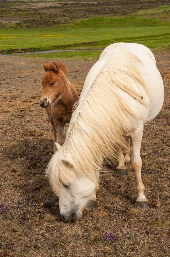 Άλογο και αυτή λίγο foal στοκ φωτογραφία με δικαίωμα ελεύθερης χρήσης
