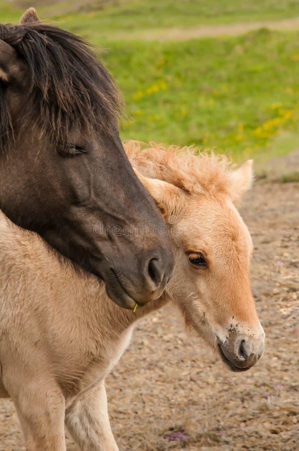 Άλογο και αυτή λίγο foal στοκ εικόνες με δικαίωμα ελεύθερης χρήσης
