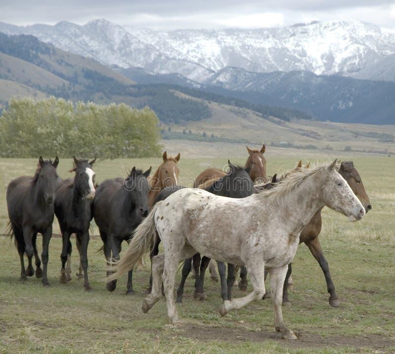 άλογο κοπαδιών στοκ φωτογραφίες με δικαίωμα ελεύθερης χρήσης