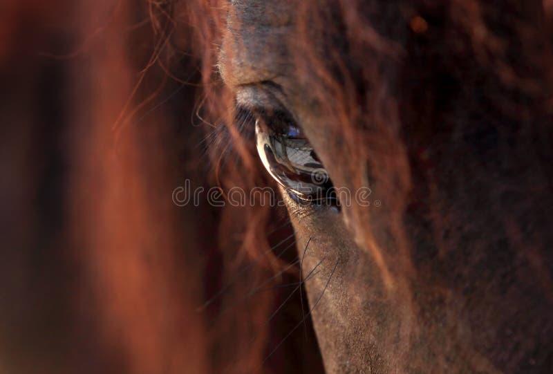 άλογο ματιών