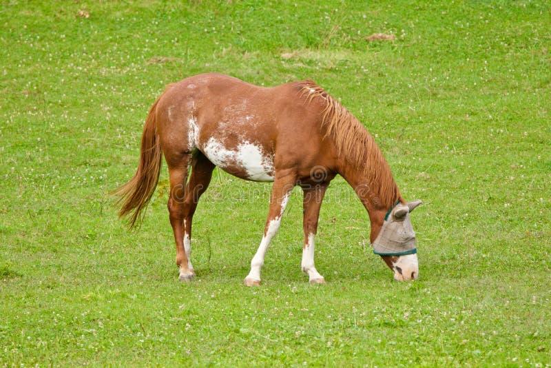 Άλογο με μια κουκούλα στοκ εικόνα