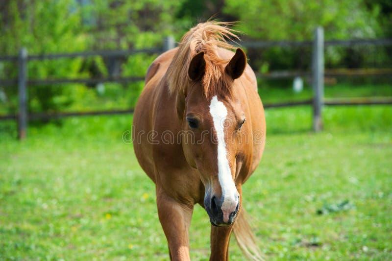 άλογο με το μακρύ Μάιν στο λιβάδι ενάντια στον όμορφο μπλε ουρανό στοκ εικόνα με δικαίωμα ελεύθερης χρήσης