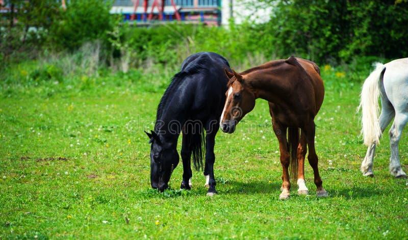 άλογο με το μακρύ Μάιν στο λιβάδι ενάντια στον όμορφο μπλε ουρανό στοκ εικόνα