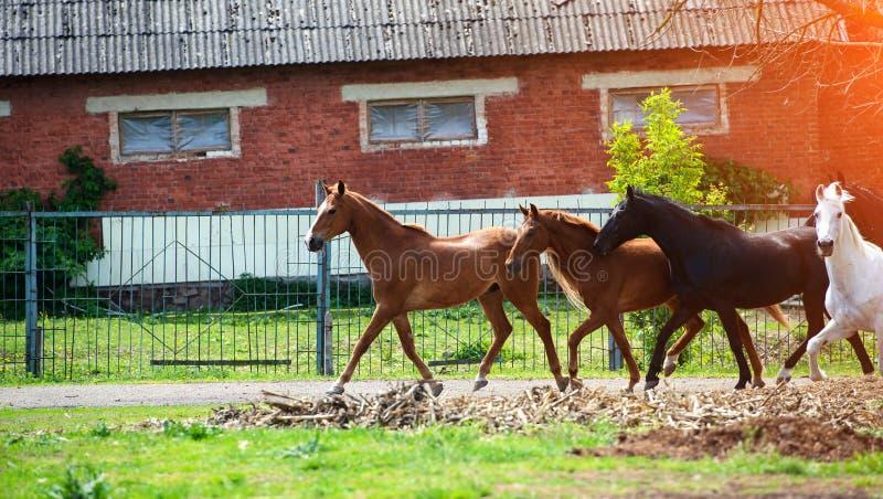 άλογο με το μακρύ Μάιν στο λιβάδι ενάντια στον όμορφο μπλε ουρανό στοκ φωτογραφίες