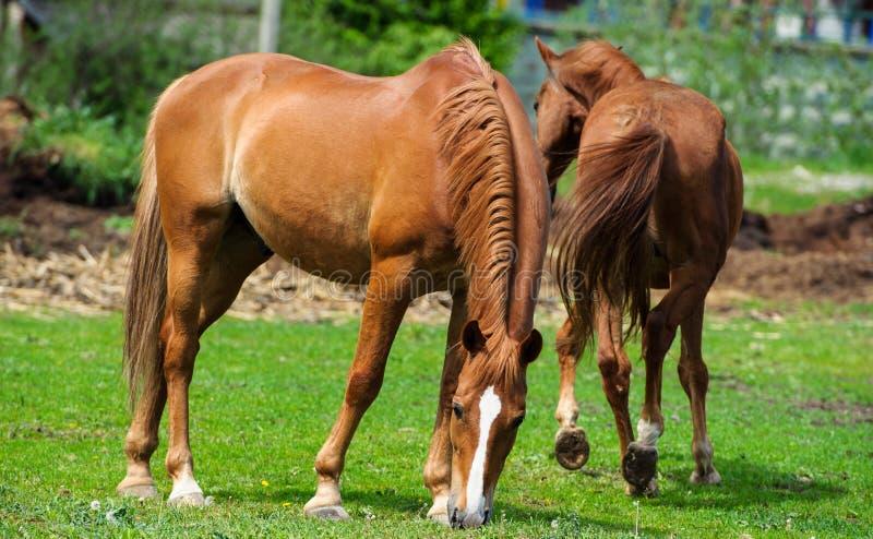 άλογο με το μακρύ Μάιν στο λιβάδι ενάντια στον όμορφο μπλε ουρανό στοκ εικόνες