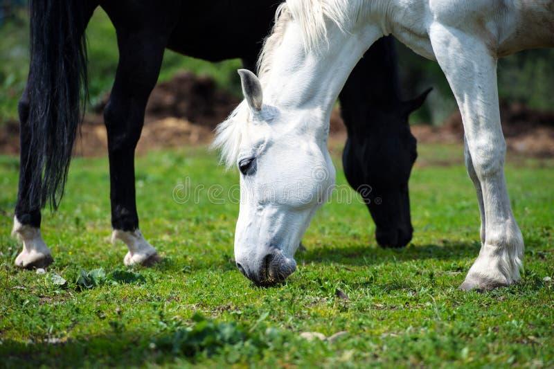 άλογο με το μακρύ Μάιν στο λιβάδι ενάντια στον όμορφο μπλε ουρανό στοκ φωτογραφία με δικαίωμα ελεύθερης χρήσης