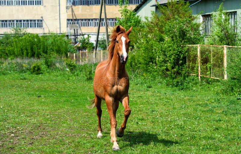 άλογο με το μακρύ Μάιν στο λιβάδι ενάντια στον όμορφο μπλε ουρανό στοκ φωτογραφίες με δικαίωμα ελεύθερης χρήσης
