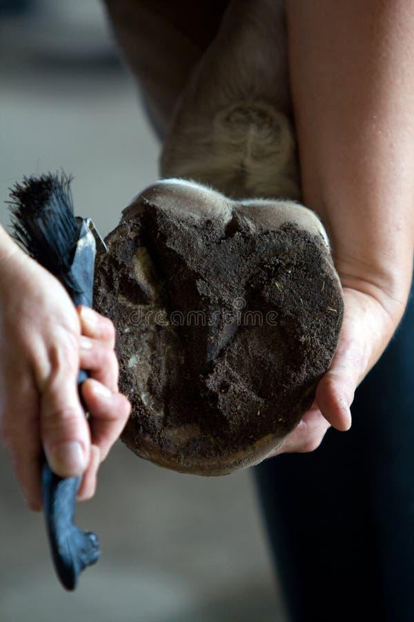 άλογο οπλών καθαρισμού στοκ εικόνα με δικαίωμα ελεύθερης χρήσης